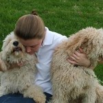 More Labradoodle Care